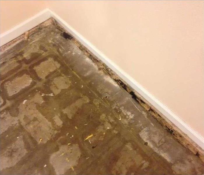Mold Damage - Seminole Home Before