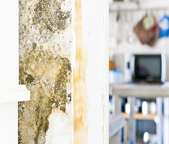 Mold Remediation Surprising Causes Of North Redington Beach Mold Damage