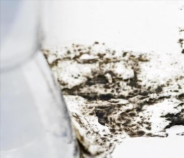Mold Remediation Mold Damage Remediation Services in Seminole