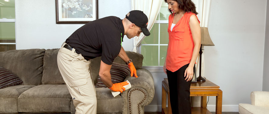 Seminole, FL carpet upholstery cleaning